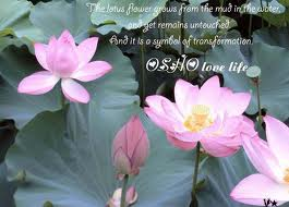 Лилии символ жизни