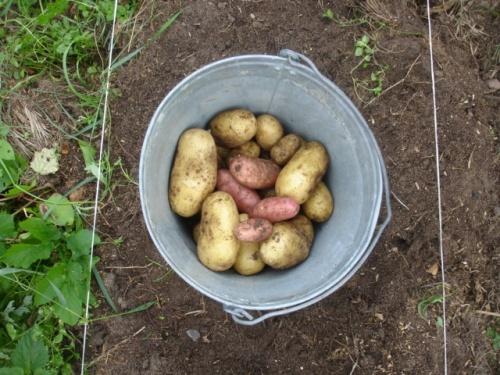приготовление картошки для рыбалки