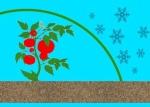 микроклимат в теплице