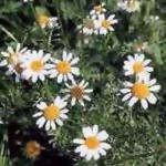 В саду, однолетние цветы