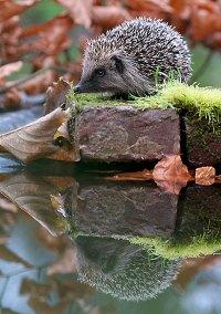 Явления природы, зеленый блог