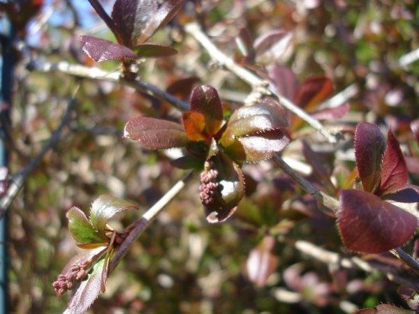 Фото на тему весна