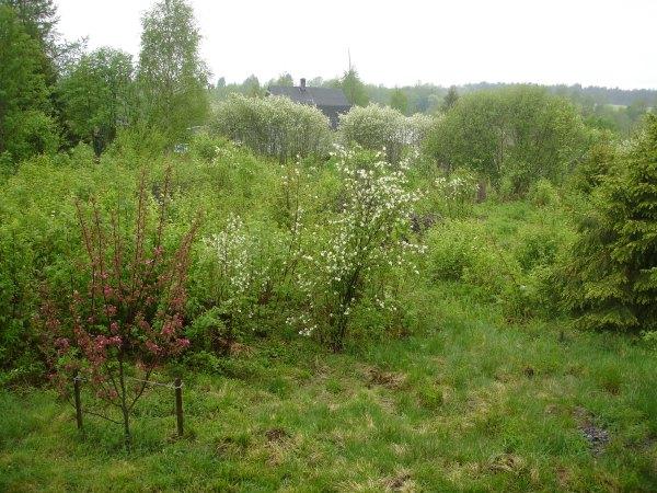 Фото на тему весна, жизнь в деревне