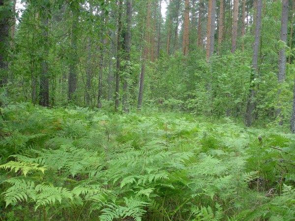 Мои фотографии, в лесу