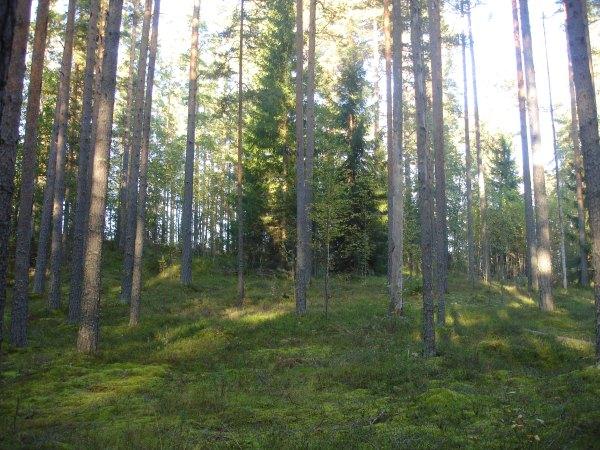Жизнь в деревне, в лесу