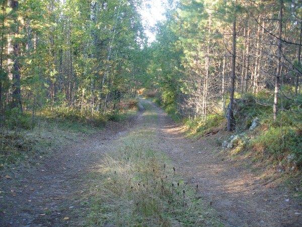 Фото на тему осень
