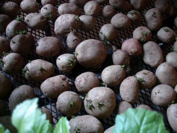 Зеленый блог, выращивание овощей