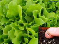 Зеленый блог, огород