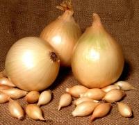 выращивание овощей, зеленый блог