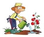 томаты, огород, зеленый блог