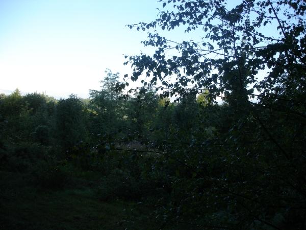 мои фото, зеленый блог