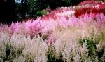 зеленый блог, цветы