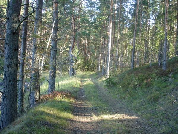 фото в лесу, зеленый блог