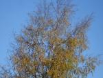 зеленый блог, осень