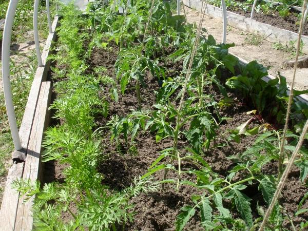 огород, зеленый блог