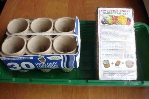 Зеленый блог, как сеять семена в кокосовый субстрат