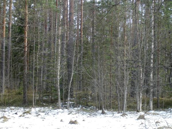 Фото в деревне, весна, зеленый блог