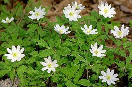 какие цветы вызывают аллергию